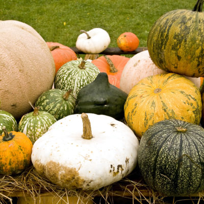 The Season of Pumpkin….10 Simple Ways to Indulge with Benefits!